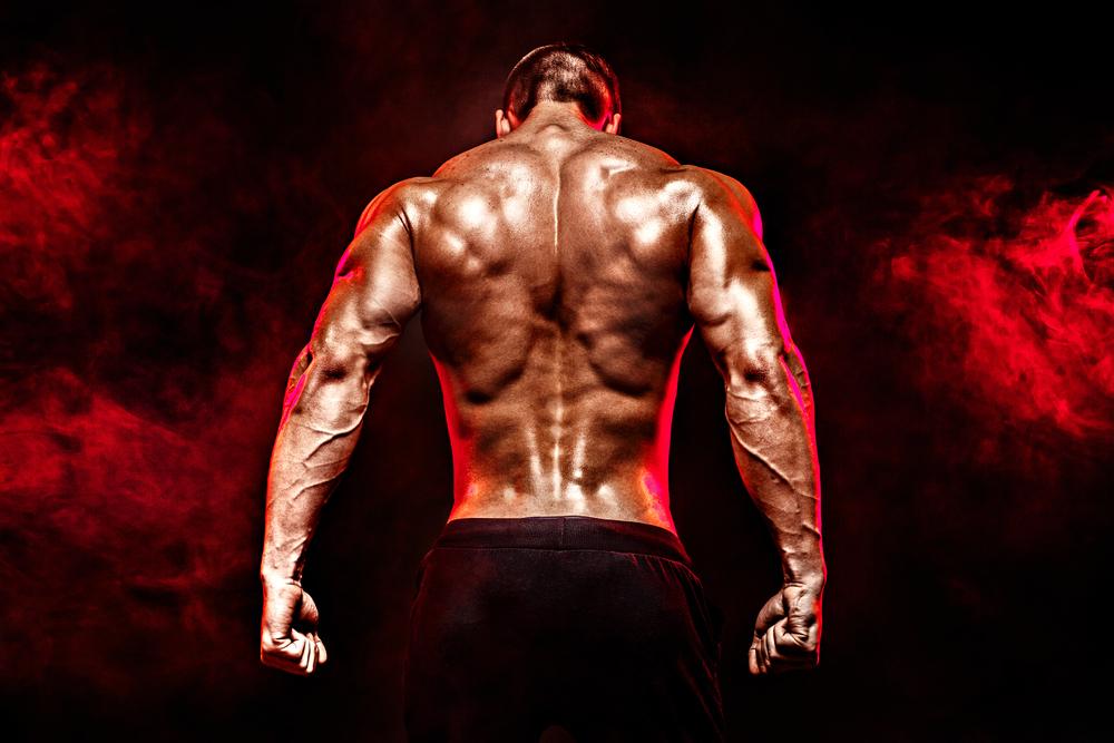 Quels sont les muscles développés par les exercices de traction?